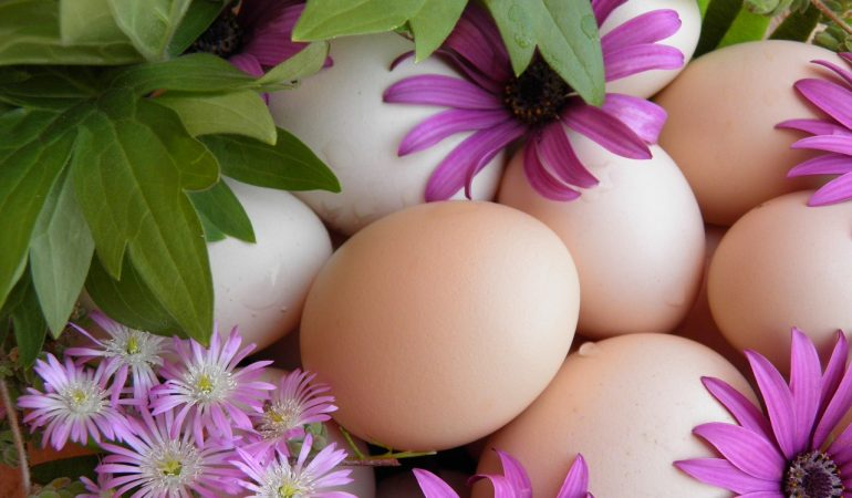 Distribuzione di uova d'amorem un'iniziativa sorprendente